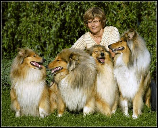verdens mindste hunde
